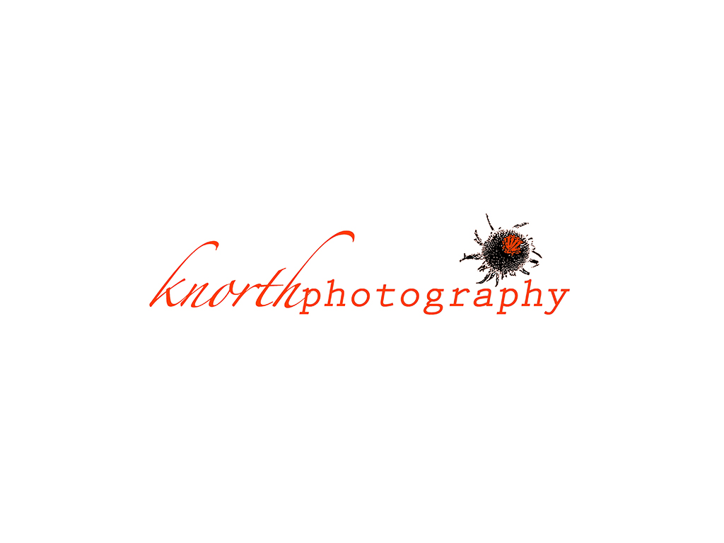 knorthphotography.2015 logo.1024wide